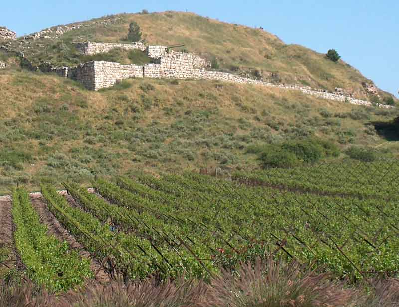 israeli_vineyard_in